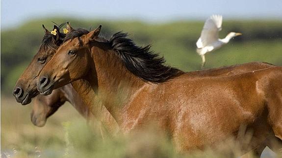 caballos--575x323